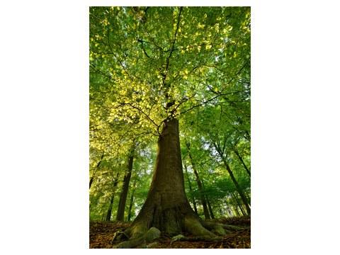 Photos d'arbre