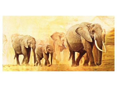 immagini di elefanti