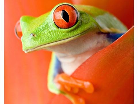 Frosch Poster