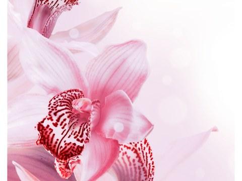 Orchidee Bilder kaufen