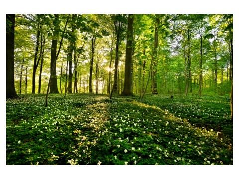 le immagini della foresta